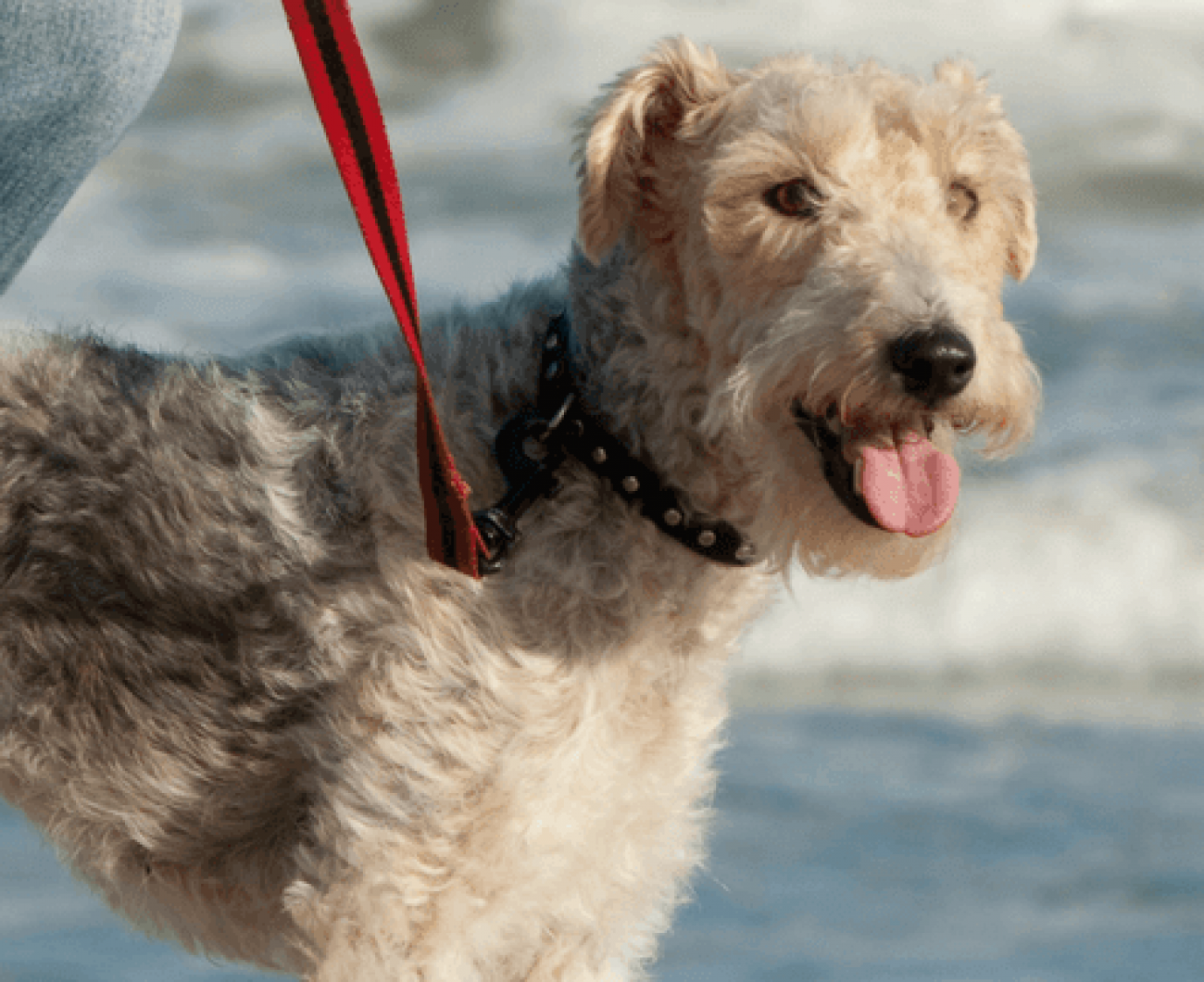 Starting Your Own Dog Walking Business
