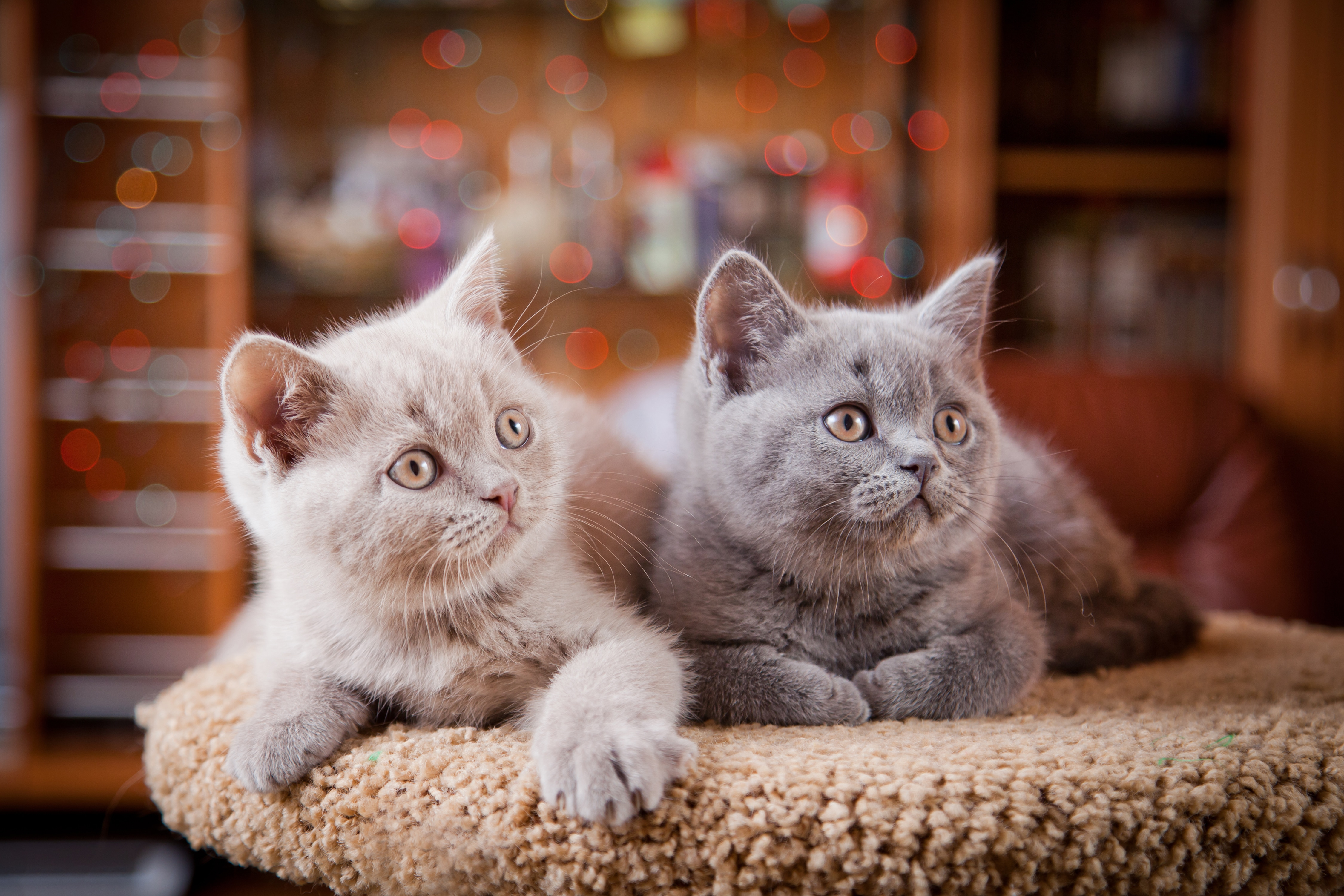 kittens-targeting-your-petbusiness-customers