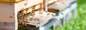 Beekeeping Club Insurance