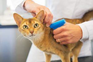 Cat being microchipped