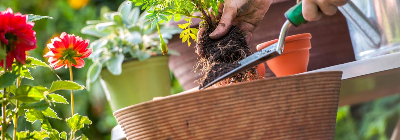 Gardening Club Insurance img