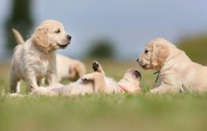 Dog Training & Pet Behaviourist Insurance