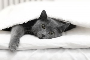 cat in bed