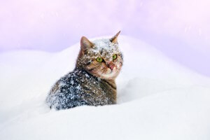 cat in snow