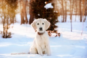 pet winter safety