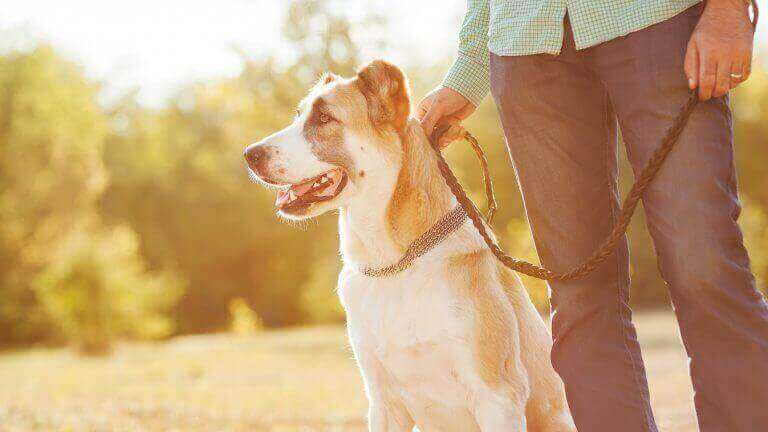 Dog on lead with owner small