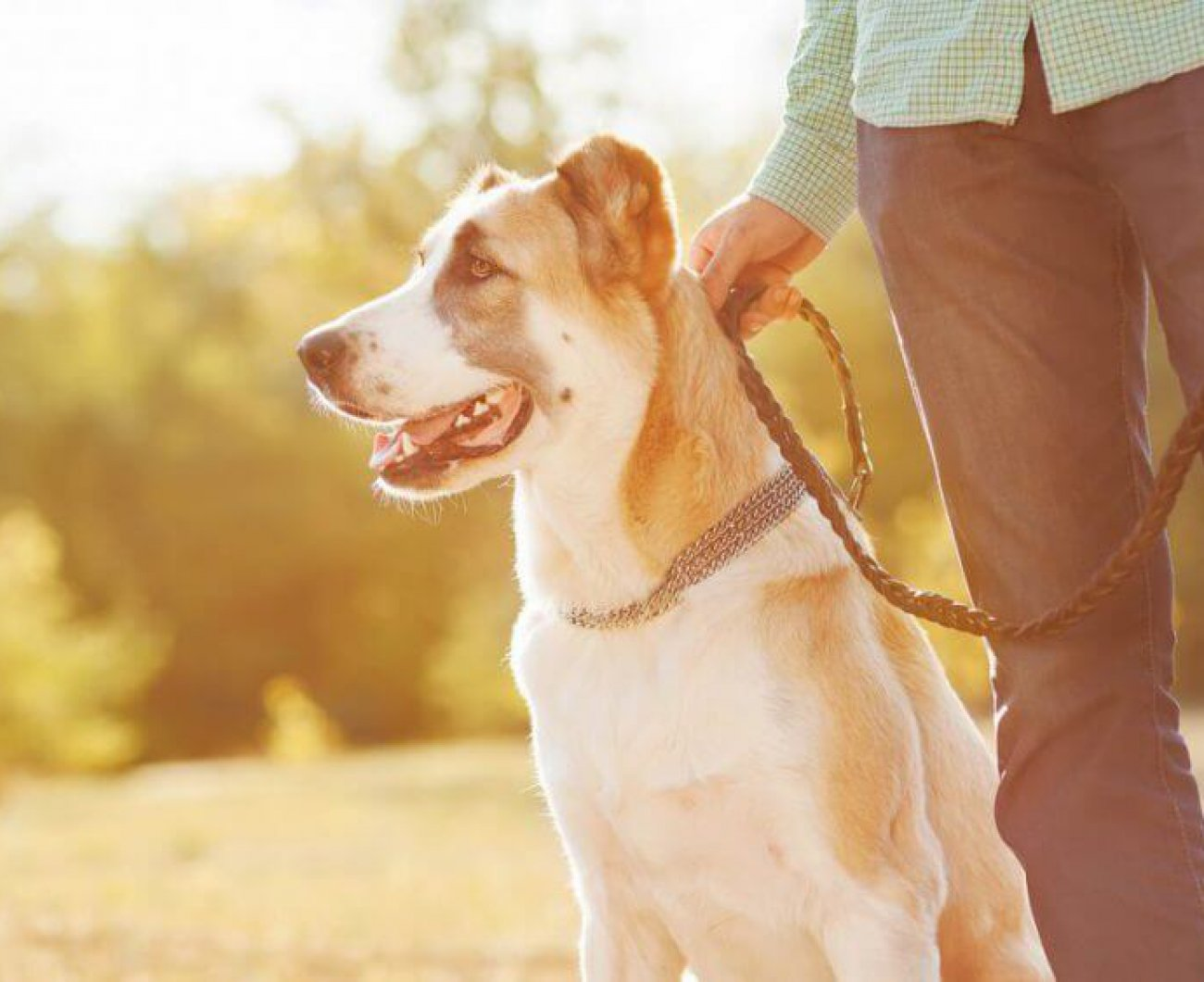 Dog on lead with owner