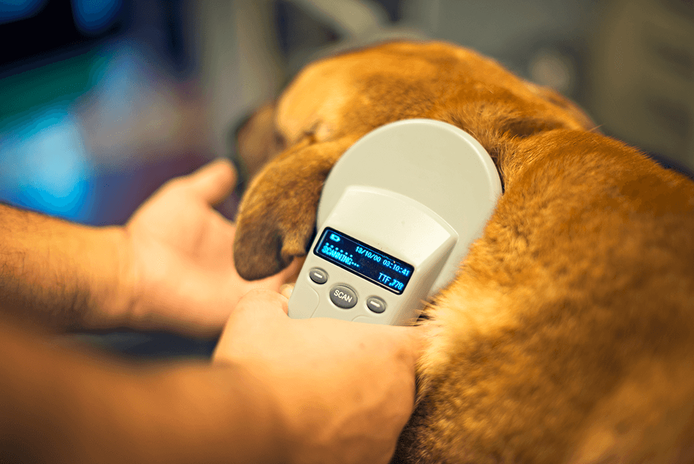 Can You Microchip Your Dog Yourself