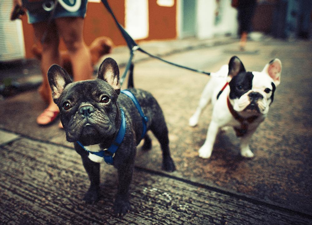 dog walker leads