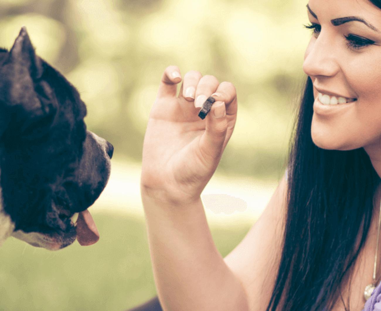 Dog Treats blog