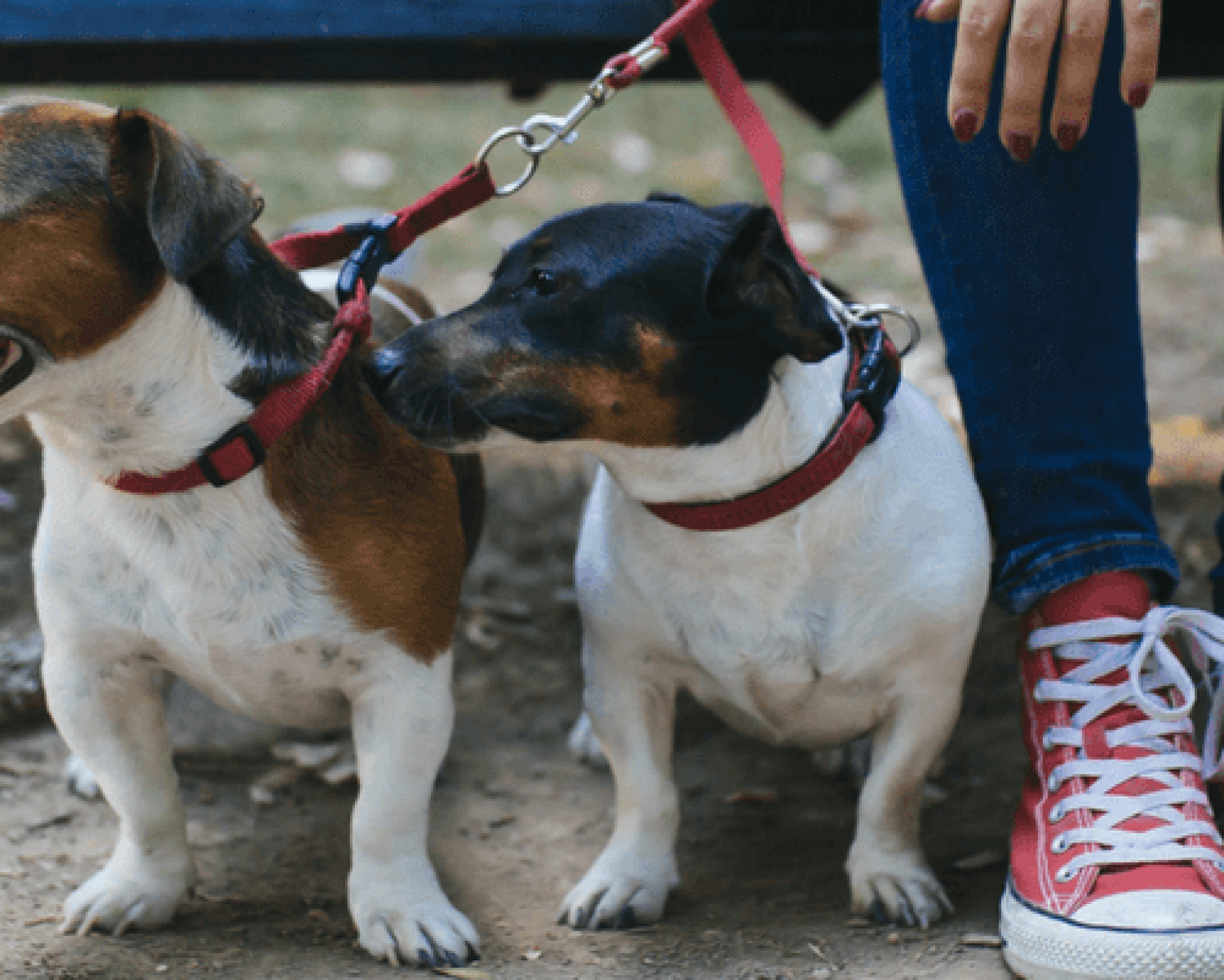 What Insurance Do I Need For My Dog Walking Business?