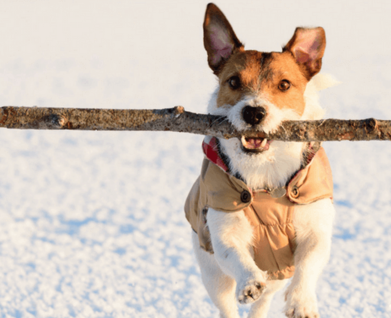 The danger of throwing sticks for your dog