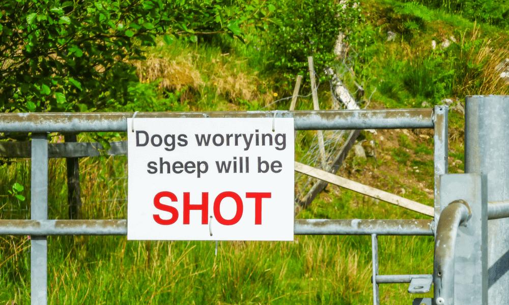 Dog Walking Legal Considerations - Laws
