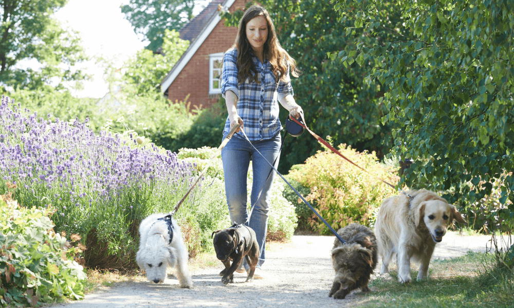 Benefits of Becoming a Dog Walker
