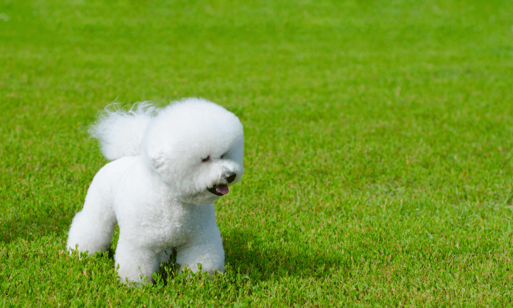 Crufts 2018: What To Watch Out For - Protectivity ...