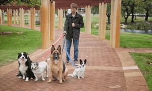 Walking-Four-Dogs