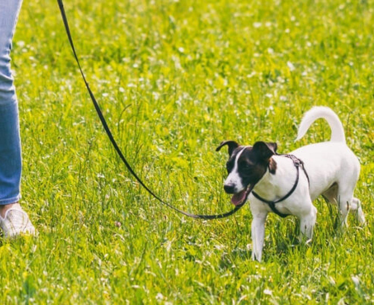 Dog Walking Agreement