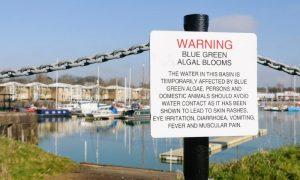 Blue-Green Algae Warning Sign