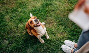 Dog Commands - Sit