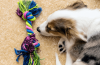 Changes introduced to dog boarding licensing